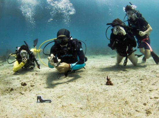 Colombia Underwater Expeditions SAS