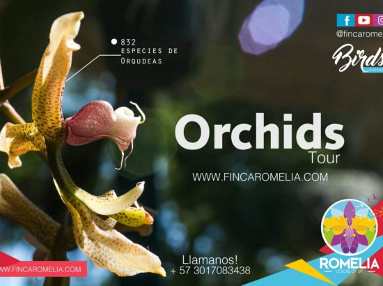 Finca Romelia Orchids and Birds